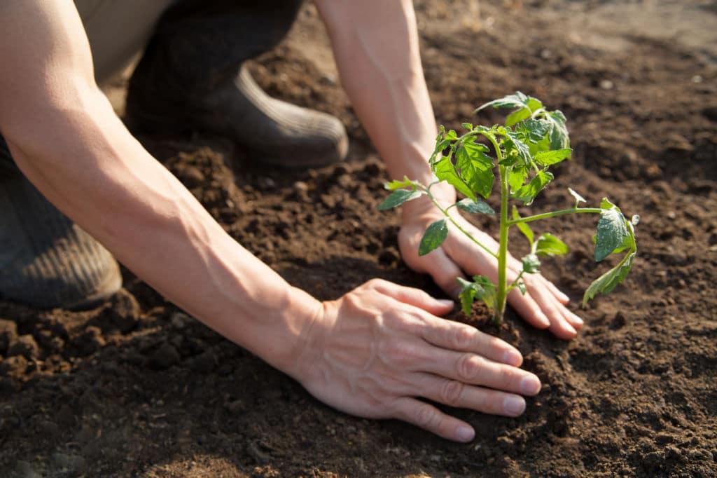 Persona plantando una plata en la tierra con sus manos