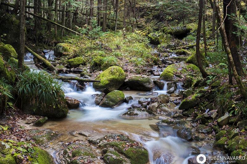Bosque con un riachuelo en la isla Shikoku, en Japón