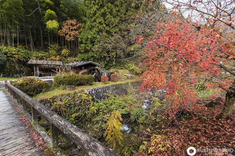 Jardín con plantas en tonos otoñales en Hokkaido, Japón