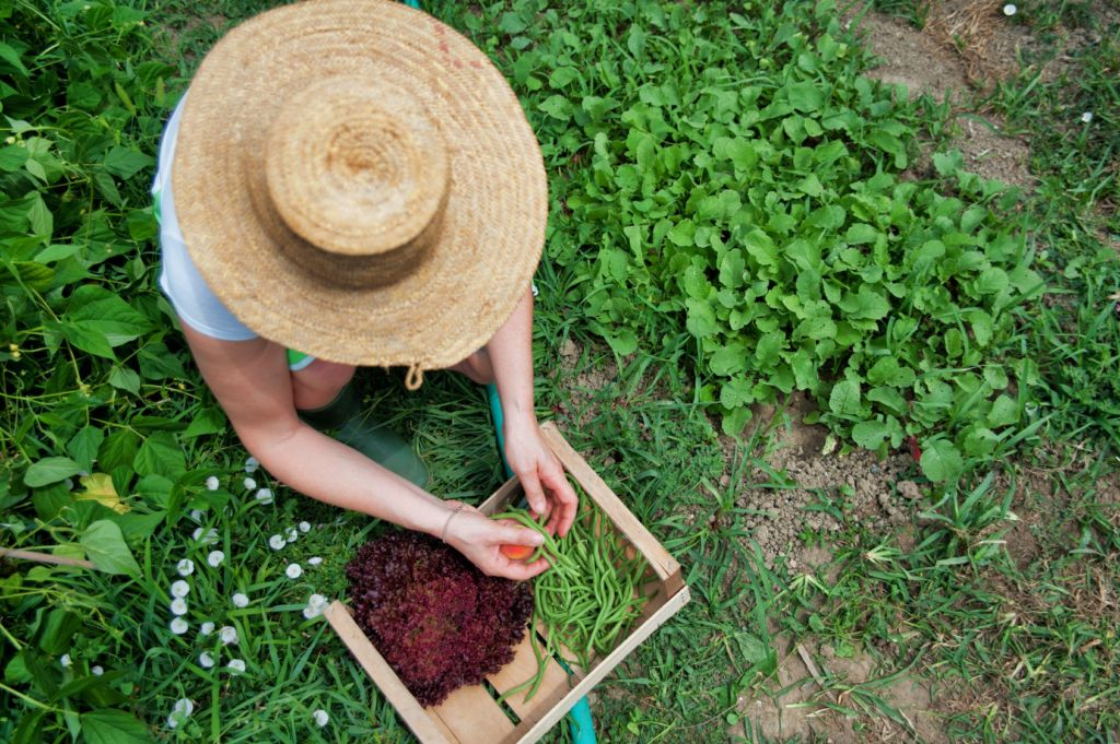 Persona recogiendo hierba en un jardín