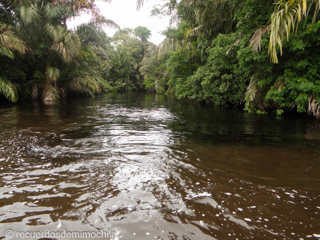 Río entre palmeras en el Parque Nacional Tortuguero de Costa Rica