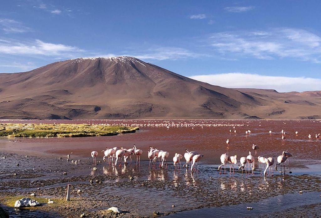 Flamencos rosas en la Laguna Colorada del Salar de Uyini Bolivia