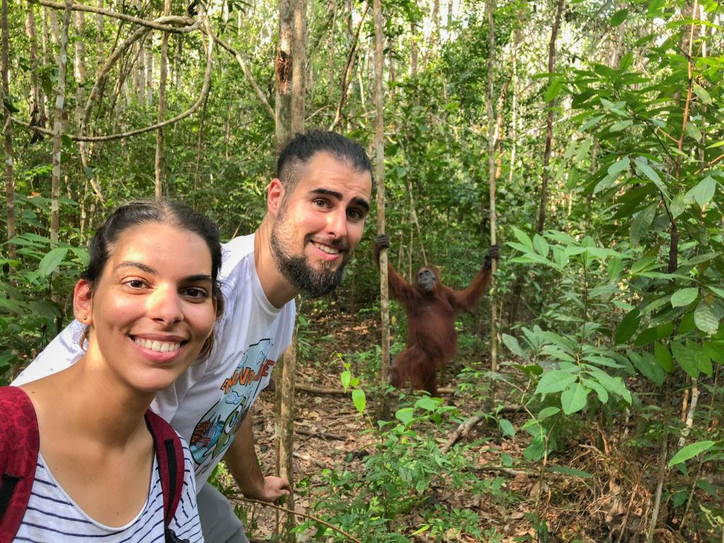 Pareja delante de un orangután en la selva de Borneo en Indonesia