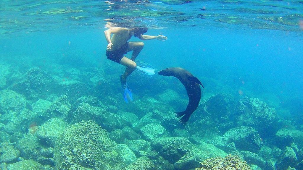 chico nadando con leon marino
