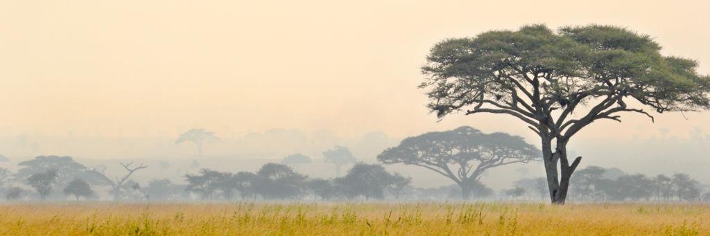 La sabana en el Serengeti en Tanzania
