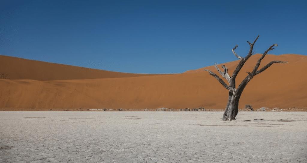 paisaje desierto africa con un arbol