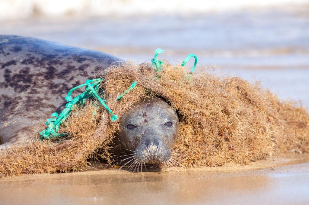 contaminación plástico foca viajar sin plástico