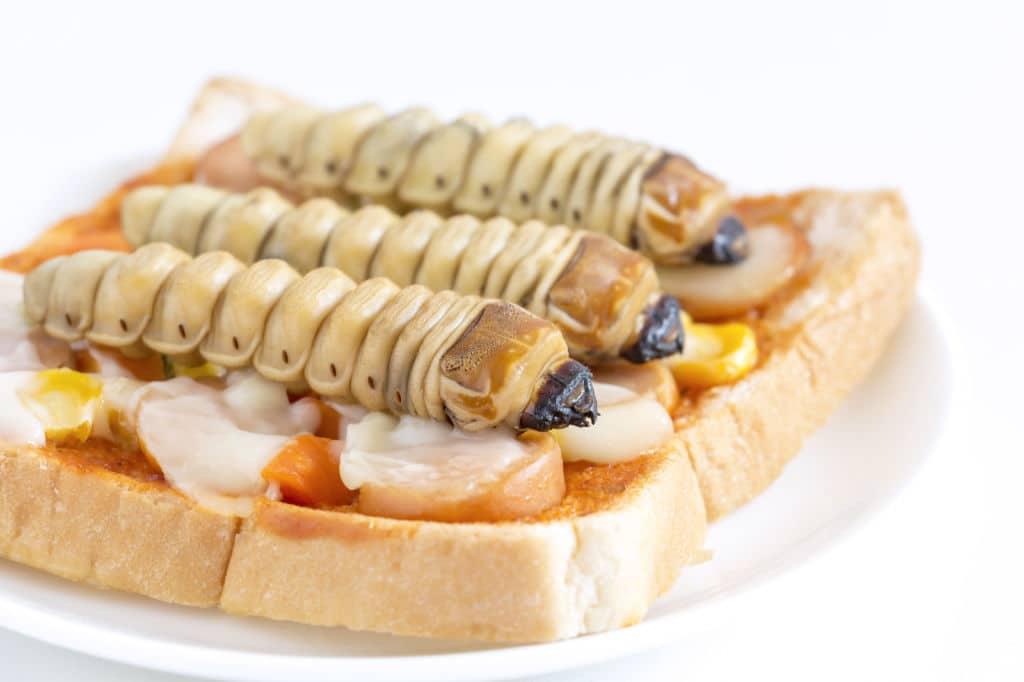 larvas australia