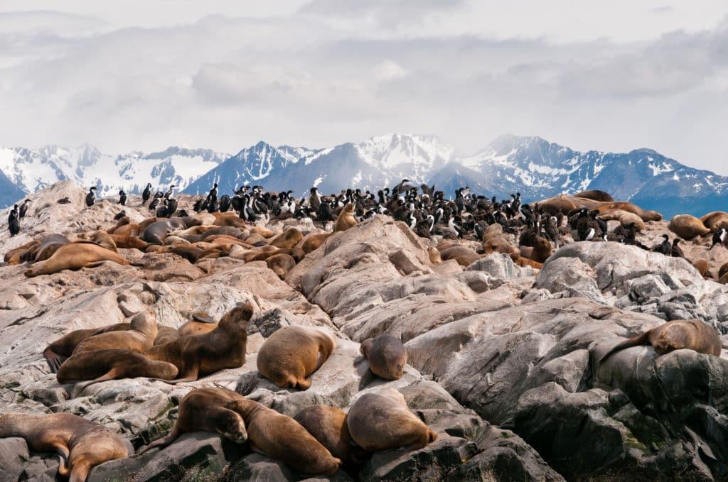 Ushuaia leones marinos y pingüinos argentina