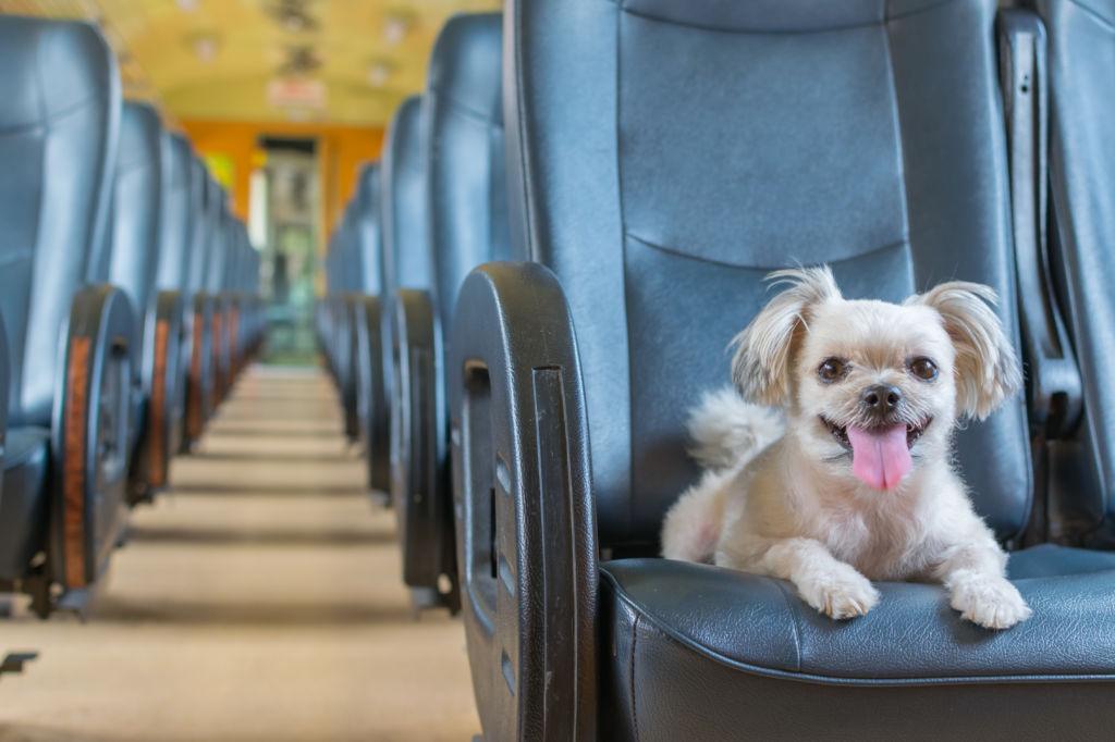 perro viajando en tren viajar con perro