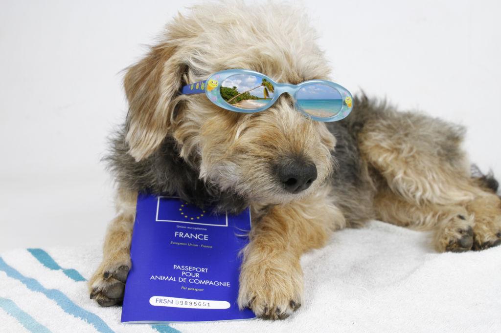 perro con gafas y pasaporte viajar con perro