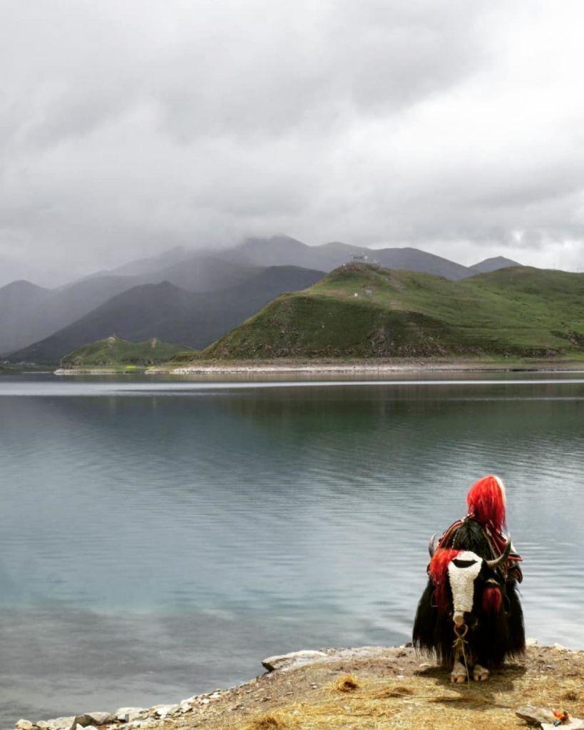 yandruk tibet