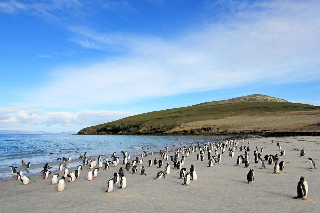 Falkland Islands Malvinas archipiélagos