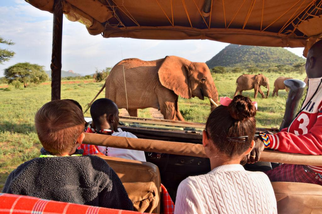 safari kenia elefante