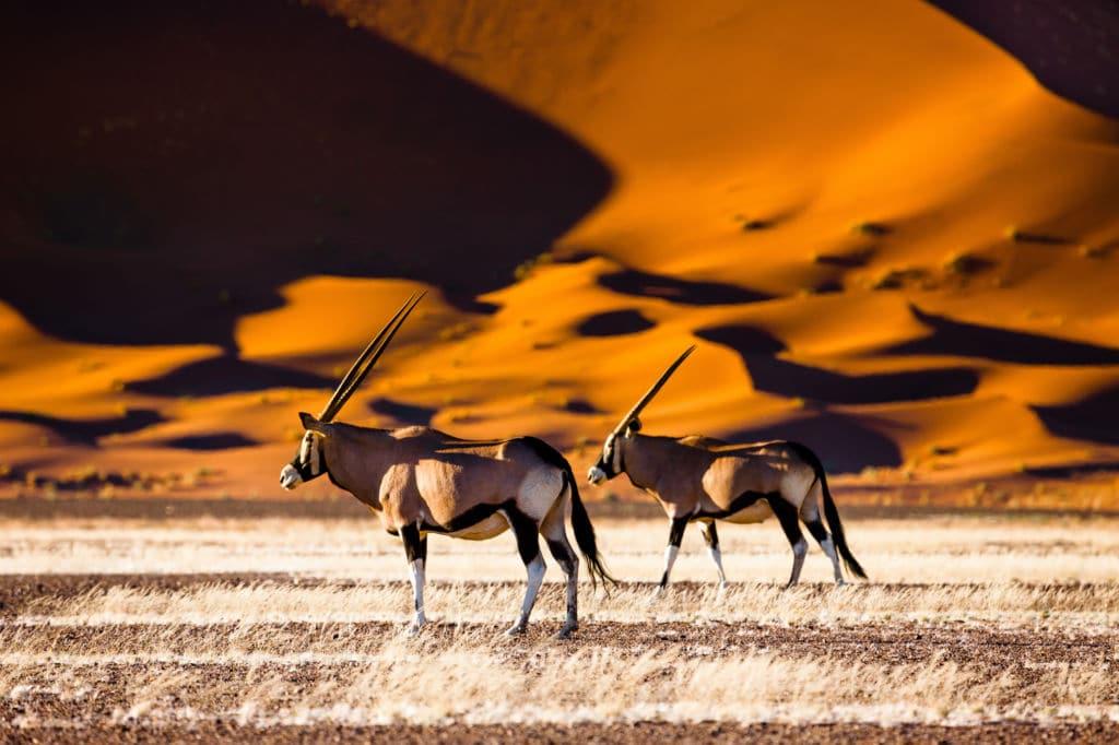 viajar a Botsuana animales safari