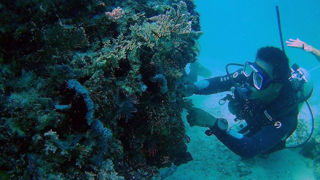 buceo en Filipinas mono viajero