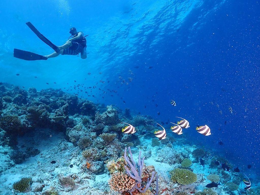 bucear en maldivas precio