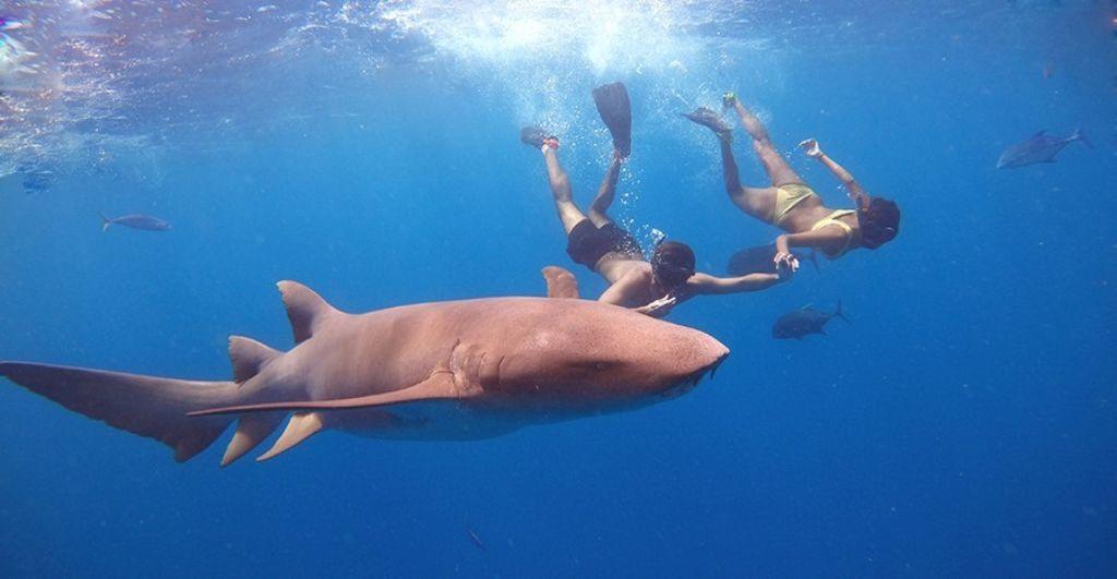 nadar con tiburones en maldivas