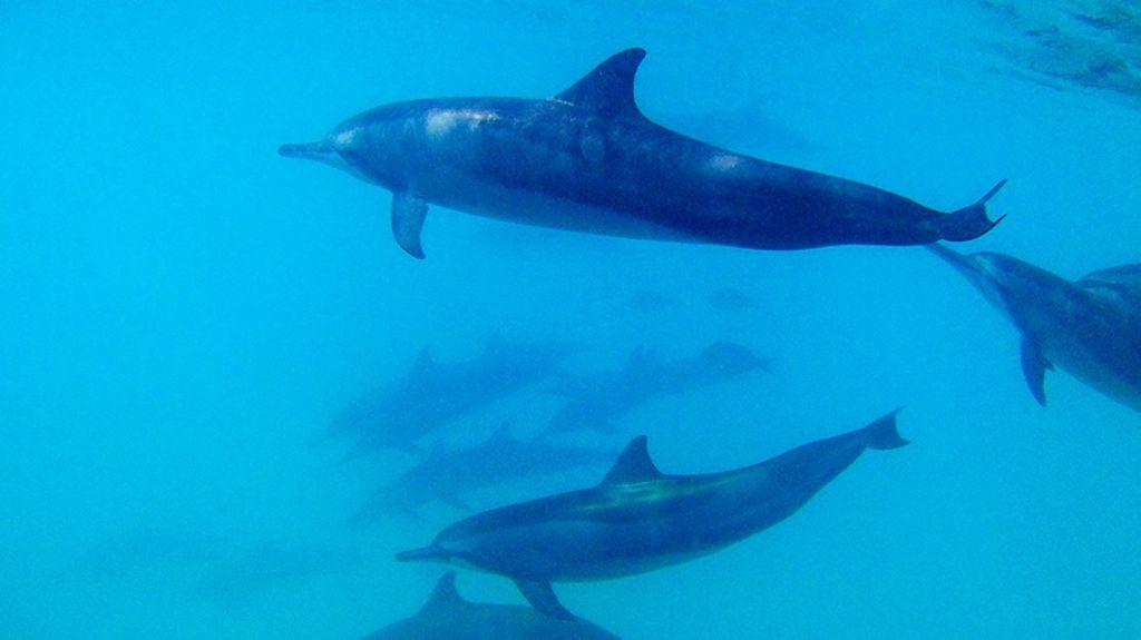 delfines y tiburones maldivas precio bucear