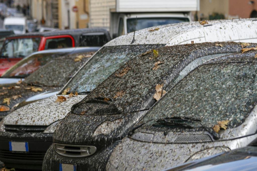 Rusia cacas de pájaro en coche fortuna