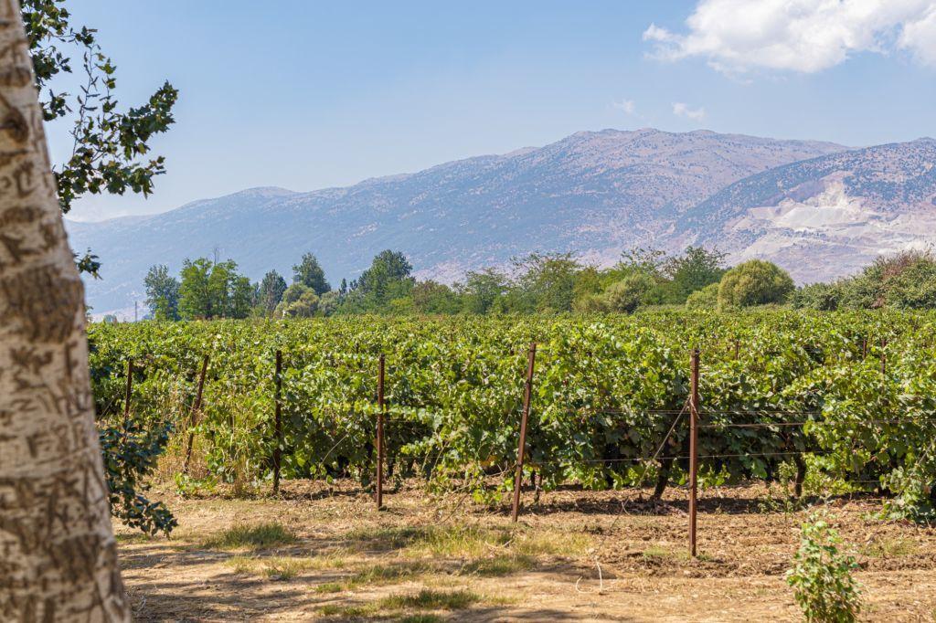 bekaa viñedos en en líbano para enoturismo