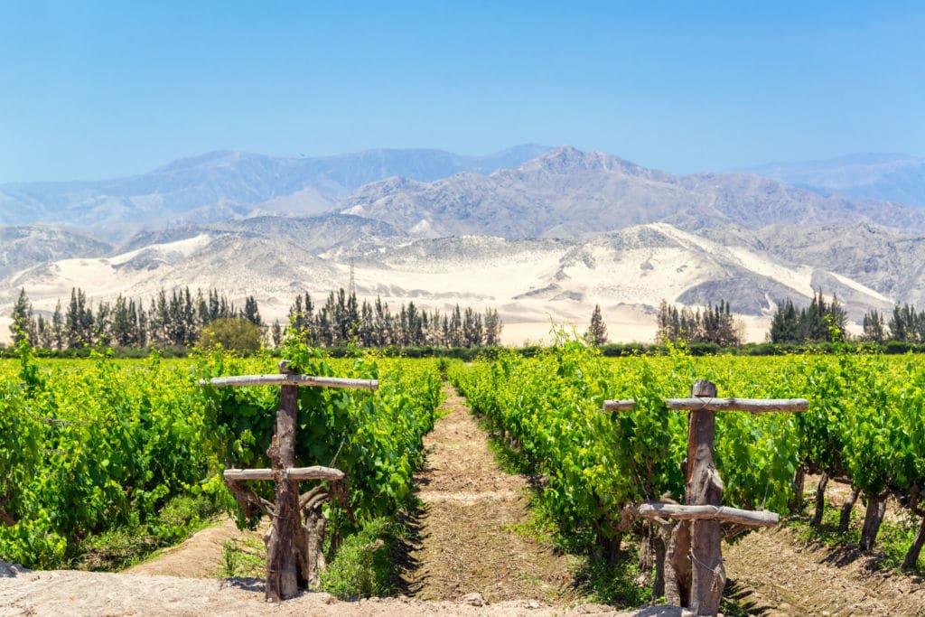 enoturismo en Perú viñas en Ica