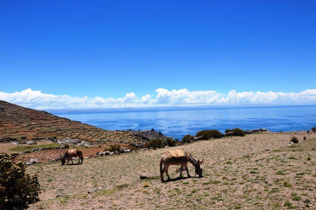 imprescindibles perú lago titicaca