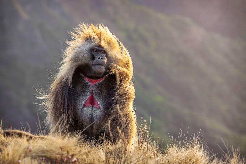 es seguro viajar a Etiopía