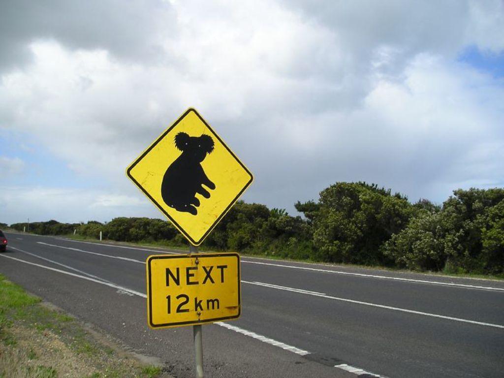 señales de tráfico de Australia koalas