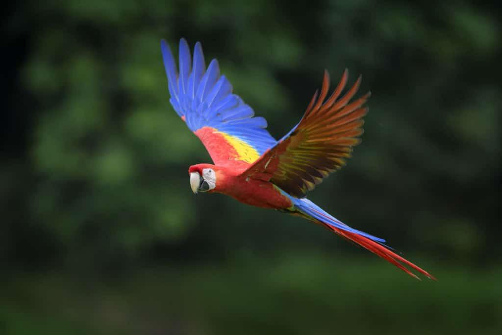 Este es el seguro de viaje obligatorio para viajar a Costa Rica tras el covid-19