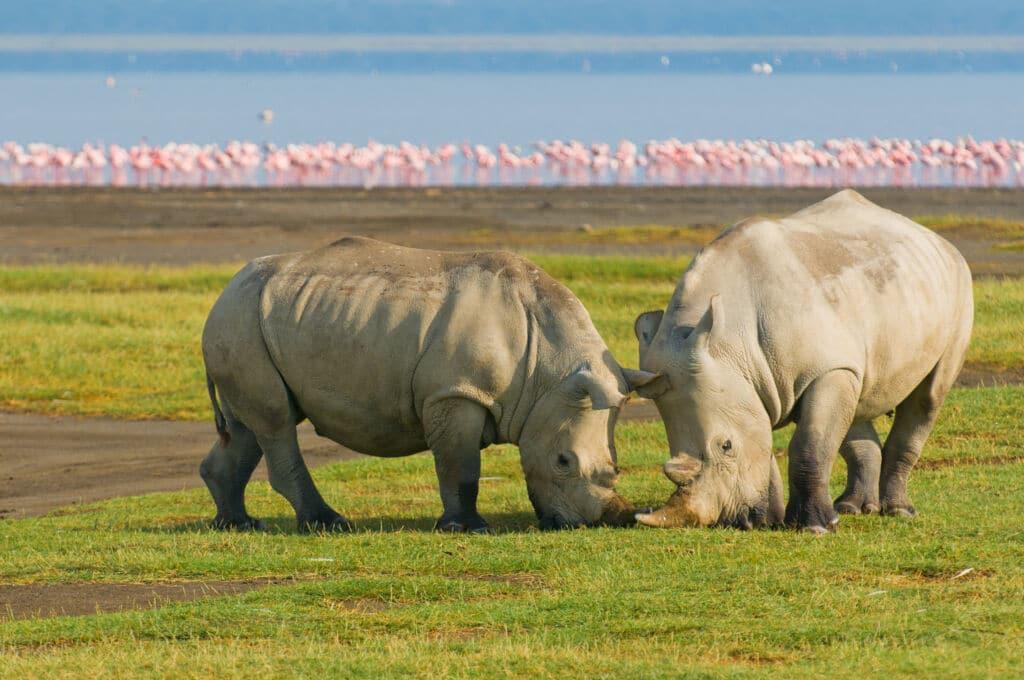 kenia safari tanzania