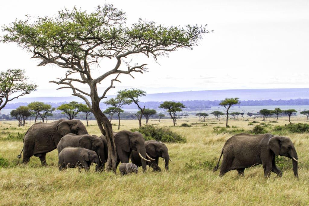 safari kenia y tanzania