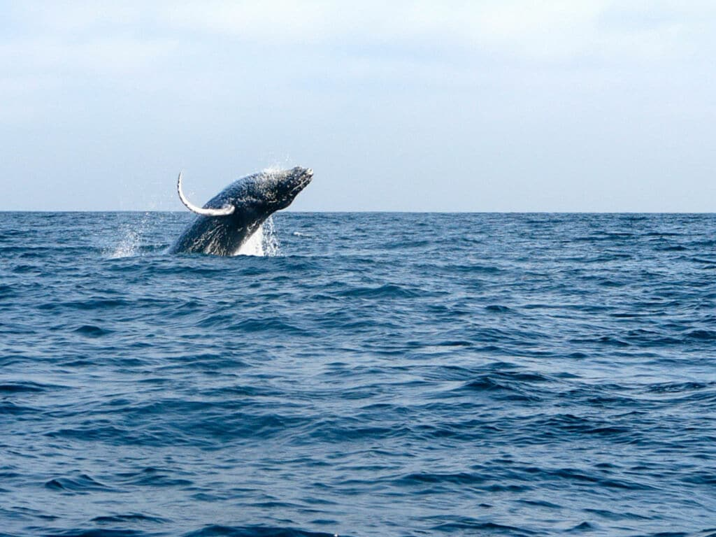 avistamiento de cetáceos en Costa Rica