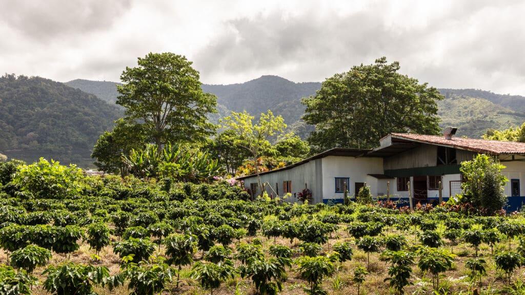 qué hacer en Costa Rica: visitar plantaciones de café