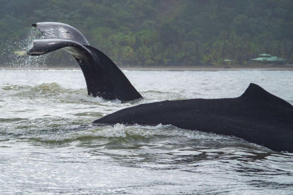 avistamientos de ballenas en el Chocó, Colombia turismo