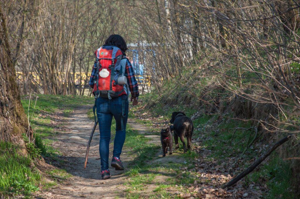 El camino de Santiago con perro, vacaciones con animales