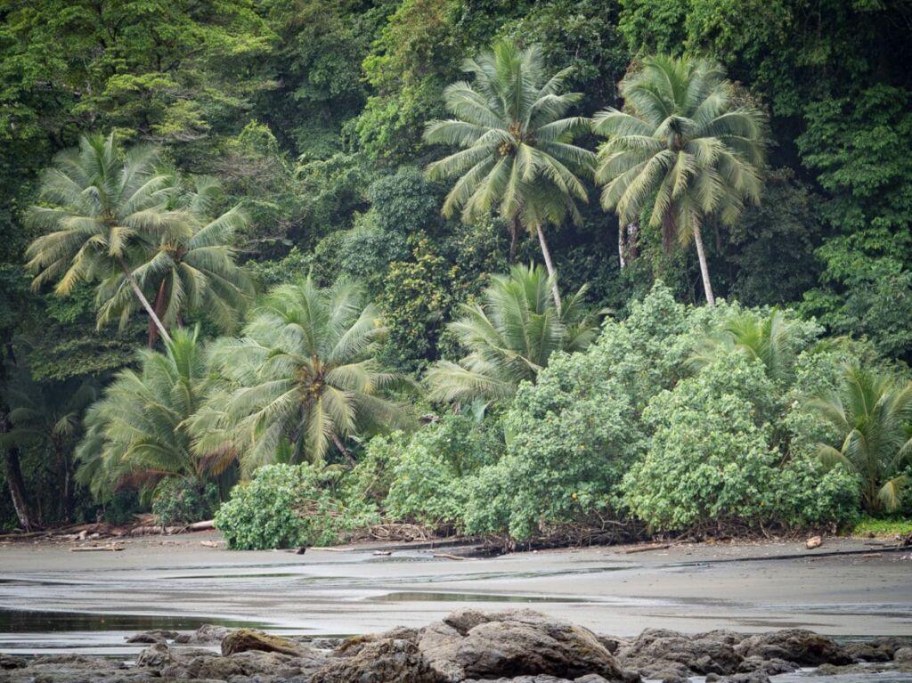 qué hacer en la costa del pacífico en Colombia