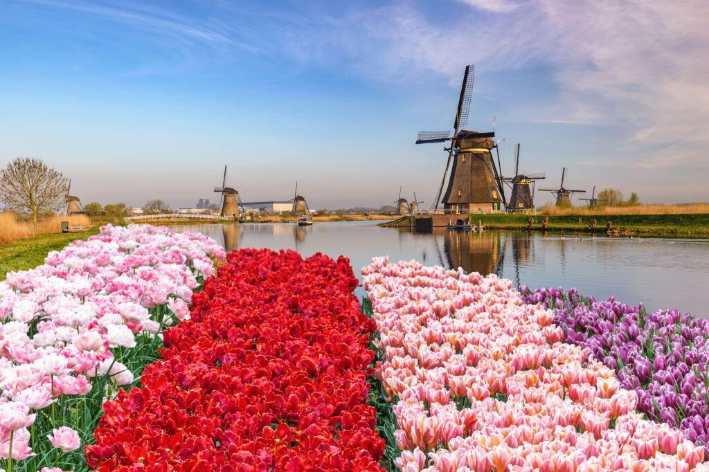 Razones y motivos por lo que ir a Rotterdam